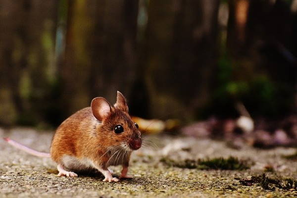 mice nest in Canterbury