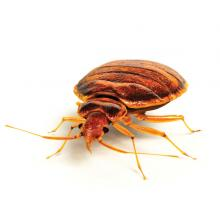 Bed bug control and removal services